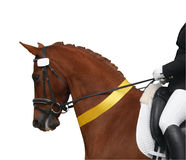 Cavalo do Dressage com fita amarela Fotografia de Stock Royalty Free