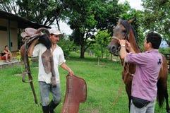 Cavalo do fino de Paso Fotos de Stock Royalty Free