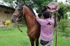 Cavalo do fino de Paso Foto de Stock Royalty Free