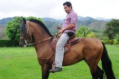Cavalo do fino de Paso Foto de Stock