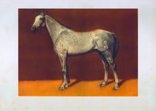 Cavalo do garanhão do ` s do tersk da tração Imagens de Stock