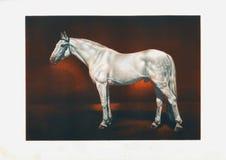 Cavalo do garanhão do trotador do ` s de orlov da tração Fotografia de Stock