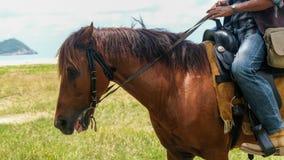 Cavalo do marrom da equitação do homem na praia fotografia de stock