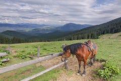 Cavalo do marrom de Hutsul nos Carpathians ucranianos imagens de stock