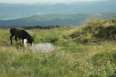Cavalo do marrom escuro nas montanhas Fotografia de Stock Royalty Free