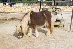 Cavalo do pônei de Brown Fotografia de Stock Royalty Free