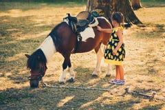 Cavalo do pônei do animal de estimação da menina exterior no parque imagem de stock