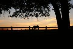Cavalo do por do sol Fotografia de Stock