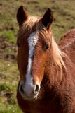 Cavalo do retrato Fotografia de Stock