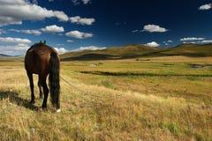 Cavalo do trabalho imagem de stock royalty free
