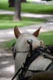 Cavalo do vagão foto de stock