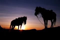 Cavalo dois Imagens de Stock
