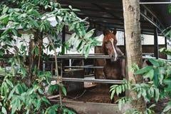 Cavalo doméstico em uma gaiola estável foto de stock royalty free
