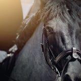 Cavalo dos esportes do olho O focinho é garanhão dos esportes no freio fotografia de stock