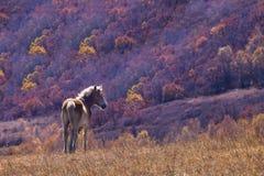Cavalo e árvore fotos de stock