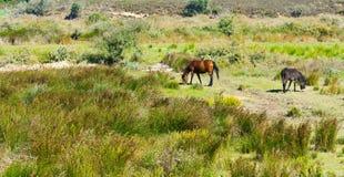 Cavalo e asno Fotografia de Stock