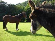 Cavalo e asno Fotografia de Stock Royalty Free