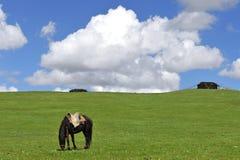Cavalo e barraca dos nómadas em Tibet Fotografia de Stock Royalty Free