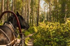 Cavalo e biga de Brown Imagem de Stock Royalty Free
