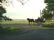 Cavalo e Buggy Fotografia de Stock Royalty Free