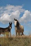Cavalo e burro no campo Fotografia de Stock
