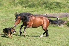 Cavalo e cão Fotos de Stock