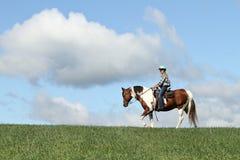 Cavalo e céu Fotografia de Stock