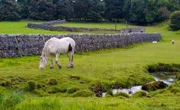 Cavalo e carneiros em um campo Fotografia de Stock Royalty Free