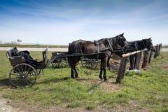 Cavalo e carrinho de Amish, engatados fotos de stock