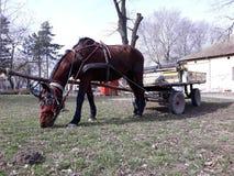 Cavalo e carrinho em um momento do resto foto de stock