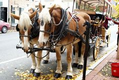 Cavalo e carro Imagem de Stock Royalty Free