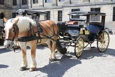 Cavalo e carro Fotos de Stock