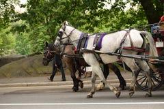 Cavalo e carro 2 foto de stock