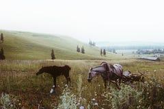 Cavalo e carro com um potro em um campo Imagem de Stock