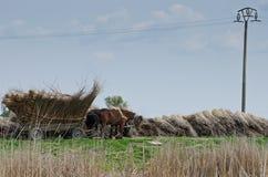 Cavalo e carro do camponês fotos de stock