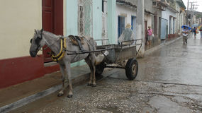Cavalo e carro, Trinidad, Cuba imagem de stock