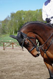Cavalo e cavaleiro 2 Imagens de Stock