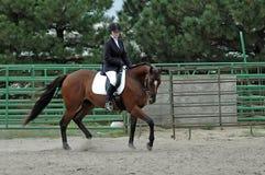 Cavalo e cavaleiro Fotografia de Stock