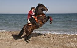 Cavalo e cavaleiro imagem de stock royalty free