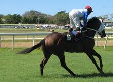 Cavalo e cavaleiro Fotos de Stock Royalty Free