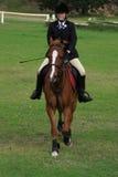 Cavalo e cavaleiro Imagem de Stock