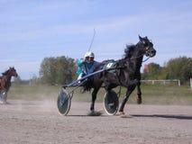 Cavalo e cavaleiro da pista de Novosibirsk das raças trotar dos cavalos das competições fotografia de stock