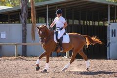 Cavalo e cavaleiro do Dressage foto de stock