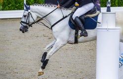 Cavalo e cavaleiro do Dressage Retrato do cavalo branco durante a competição do adestramento Fotos de Stock