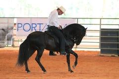 Cavalo e cavaleiro pretos no rodeio Imagens de Stock