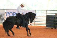 Cavalo e cavaleiro pretos no rodeio Imagem de Stock Royalty Free
