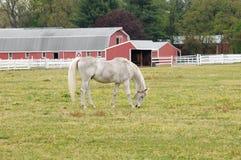 Cavalo e celeiro Fotos de Stock