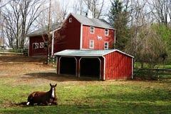 Cavalo e estábulo Imagem de Stock Royalty Free