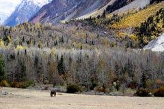 Cavalo e floresta Fotografia de Stock Royalty Free