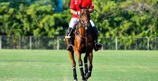 Cavalo e jogador imagens de stock